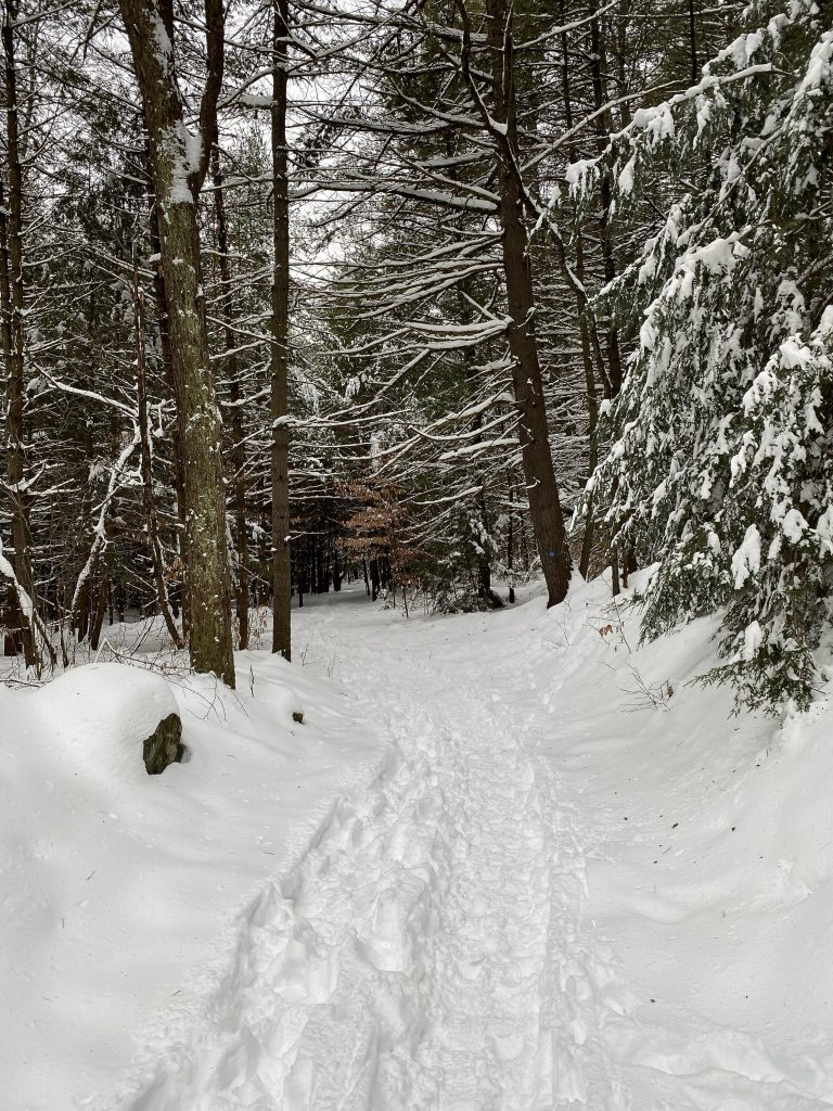 Path through the snowy woods