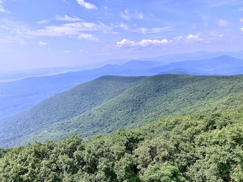 View from Fire Tower